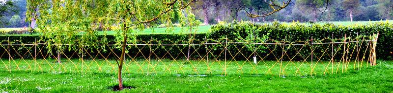 Osier vivant clôture vivante plessy palisse arbre tressé.